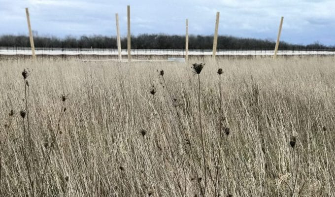 Hay field, Alternatives for Women PEC
