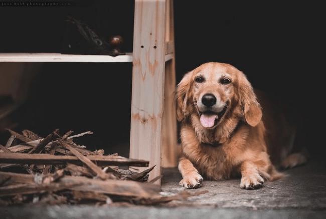 Bark from Bark Woodshop, Prince Edward County